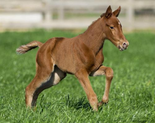 Start saving for the Pierro foals!